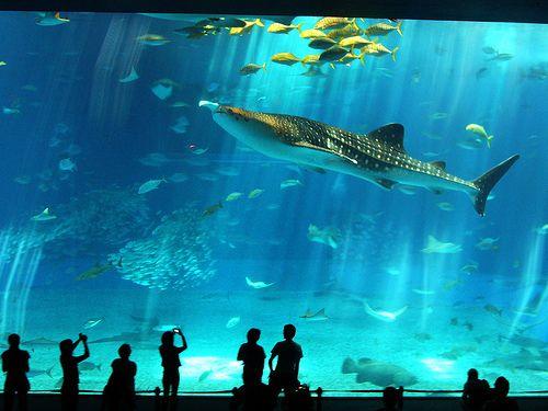 Resultado de imagen de acuario barcelona Cursos fotografía Barcelona