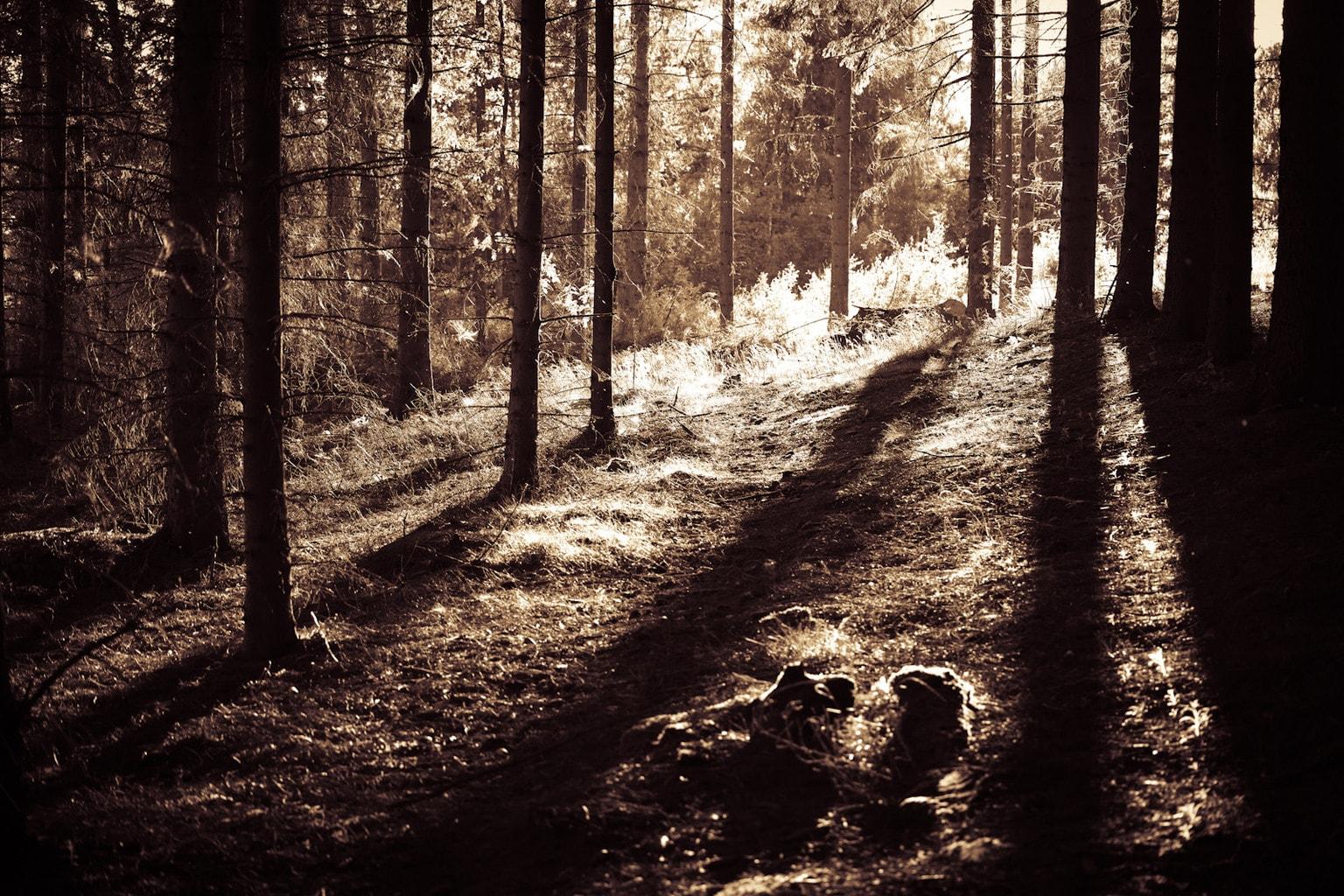 Contraluz en un bosque. Cursos fotografía Barcelona