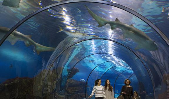 Consejos para hacer fotos en un acuario