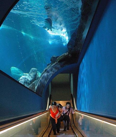 Salida fotográfica Aquarium de Barcelona